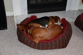 Love is cuddling on a cold day. © 2012 dogear6 llc