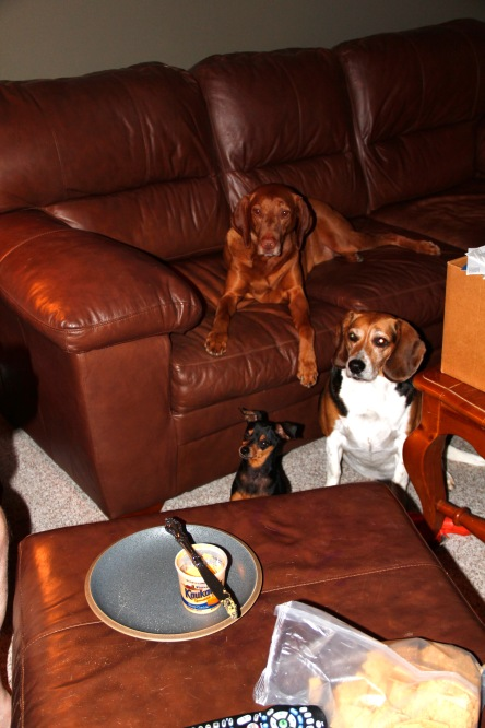Are you going to share that treat? © 2012 dogear6 llc