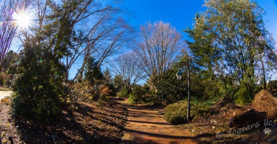 Winter at Lewis Ginter Botanical Gardens