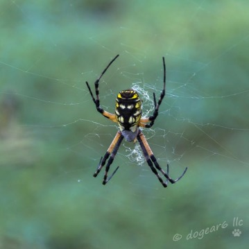 Next Day - Same spider, much thinner