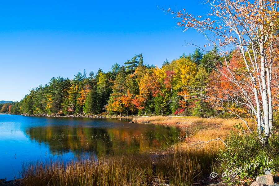 Eagle Lake in Acadia National Park;  Mount Desert Island, Maine