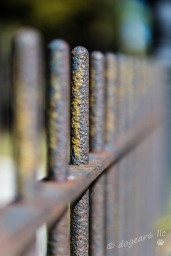 Iron fence around a family plot at Hollywood Cemetery in Richmond, Virginia