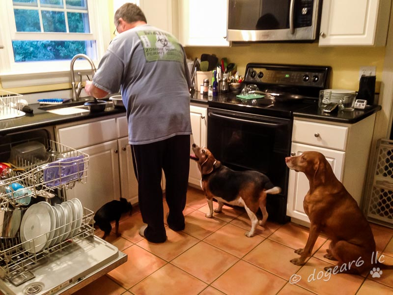 Dogs Getting Fed