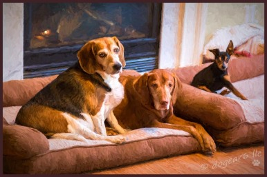 The beagle, Vizsla and miniature pinscher. Do you have a treat?