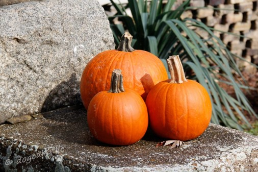 Original photo of pumpkins taken in Harper's Ferry, West Virginia.