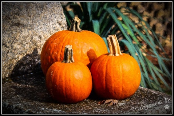 "Pumpkins taken in Harpers Ferry, West Virginia. Post processed using Topaz Impressions, ""Rembrandt 2"" and on1 border, ""Black Key""."