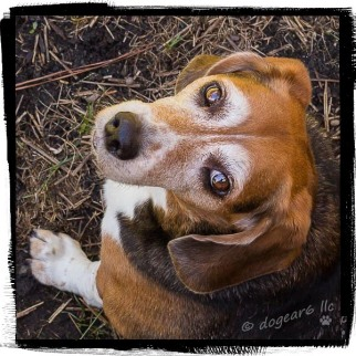 Beagle in the backyard. The file is not opening correctly for me to tell how I processed this.