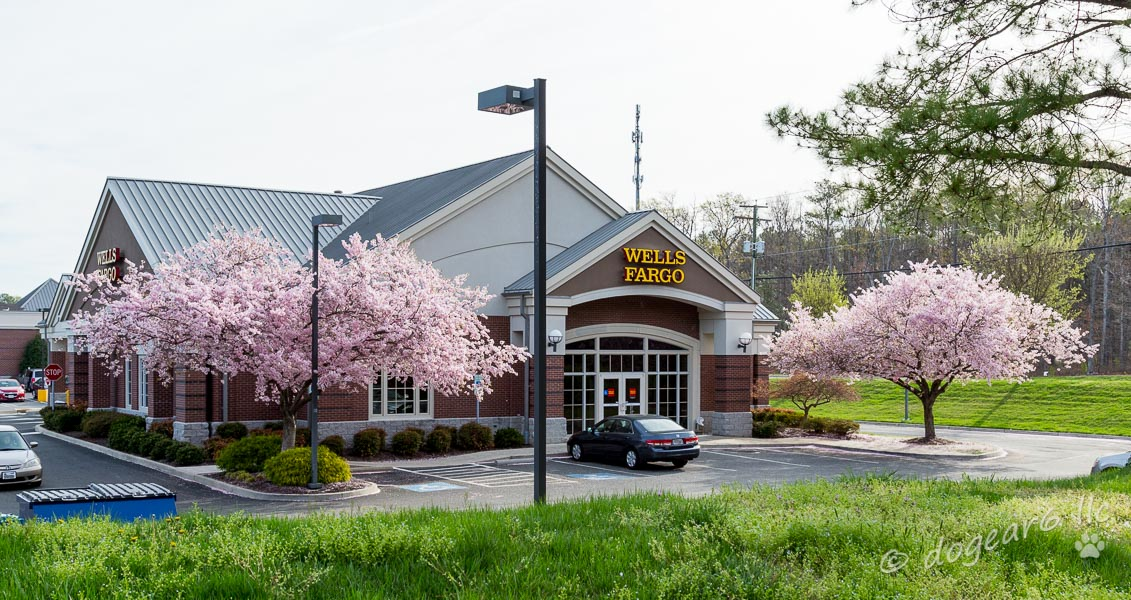 Flowering trees at the bank